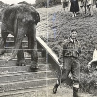 Belfast Zoo's 85th birthday will be a roaring success