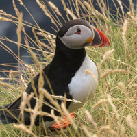 Rathlin seabird centre manager Hazel Watson on island life and puffins versus guillemots