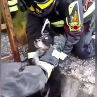 Video shows puppy being rescued after falling down well