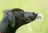 Gardening advice: Tips for making your room outside a safe space for pets