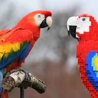 Lego parrots come face to face with real thing at zoo