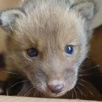 Ian the baby fox rescued by firefighters after getting stuck in wall