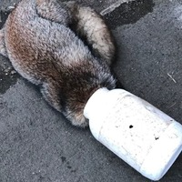 Fox 'knocked on door for help' after getting head stuck in container