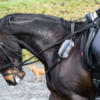 Fitness trackers for racehorses could enhance performance and reduce injuries