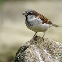 Take on Nature: Tweet some good news about the birds