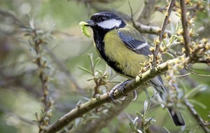 Gardening: Top tips to help birds and beneficial bugs