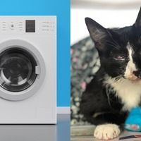 'Miracle cat' Poppy survives 30-minute wash cycle