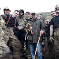Firefighters dig through soil to rescue dog stuck in rabbit hole