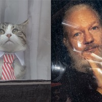 They will be reunited in freedom: WikiLeaks confirms Assange's cat is safe
