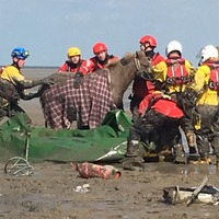 Riders and horses saved from mud after beach rescue