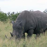 Anti-poaching technology to expand globally in bid to save wildlife