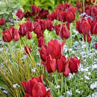 Gardening: Four of the best places in Britain to check out tulips this spring