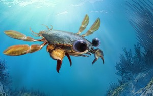 Strange Chimera crab sheds new light on crustacean evolution