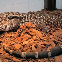 RSPCA issues warning after 4,000 exotic pets rescued