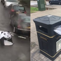 Pop-up panda tent becomes unlikely face of Storm Hannah on social media
