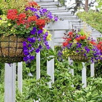 Gardening advice: Here's how to get the best out of your hanging baskets