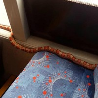 'Fare-dodging' snake removed from bus
