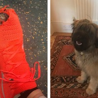 Runner completes marathon despite dog chewing his trainers to pieces