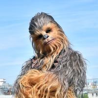 Star Wars directors and cast pay tribute to 'true legend' Chewbacca star Mayhew