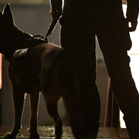 Fugitive hiding in outdoor toilet flushed out by police dog