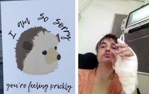 Sleb Safari: Pete Doherty, a hedgehog and an infected finger