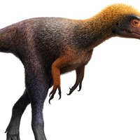 Meet the T. rex cousin who you could literally look down on