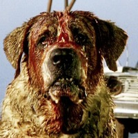 Cult Movie: Stephen King's shaggy dog story Cujo offers basic horror fun
