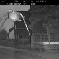 Pigeon caught speeding by German authorities