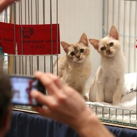 In Pictures: Pussycats galore at Dundee pet show