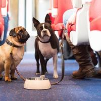 East Midlands Trains unveils dog-friendly services