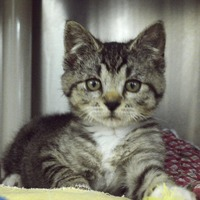 Amazing kitten survives being encased in foam and thrown in bin