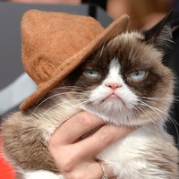 Unimaginably heartbroken: Meme-famous viral sensation Grumpy Cat dies