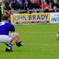Cavan's dog day finally arrives with win over rivals Monaghan