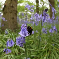 Many bee species extinct or under threat in UK, report says