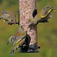 Garden feeders boost populations of birds, study suggests