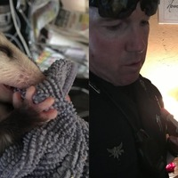 US police officer takes in baby opossum for the night after its siblings died