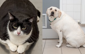 Nine overweight pets embark on weight-loss challenge