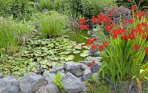 The Casual Gardener: How a pond can bring light and wildlife into your garden