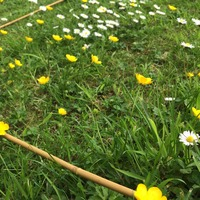 Gardeners urged to count flowers in their lawns to help bees
