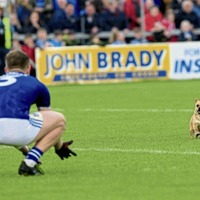 Dodgy Tackle: A week on the beat of a Breffni barker