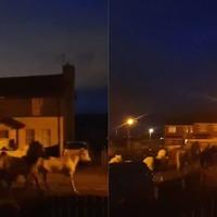Herd of horses seen trotting down residential street