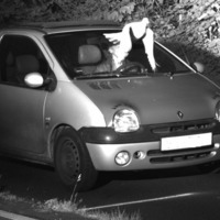 'Guardian angel' pigeon saves speeding driver from fine