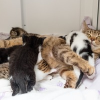 Homeless kittens found healthy after being born inside Iceland 'bag for life'