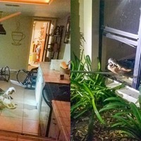 Alligator measuring 11 feet breaks into Florida resident's home through window