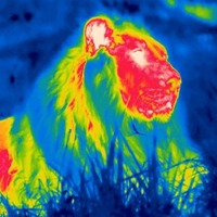 Thermal images show off nighttime activity among London Zoo animals