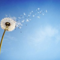 Bless you: How to outsmart hay fever this summer