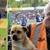 Dog on pitch at Cavan game fuels internet conspiracies