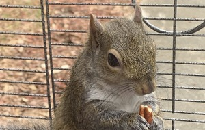 Alabama man fed meth to caged 'attack squirrel'