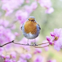 Noise pollution is hampering birds communicating with each other