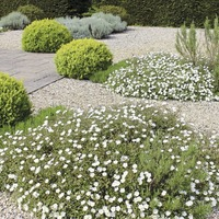 Bring a touch of the Med to your garden